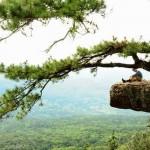 ภูกระดึงความสวยงามของธรรมชาติที่มาพร้อมกับความท้าทาย